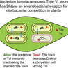 Bacterial Secretion Systems