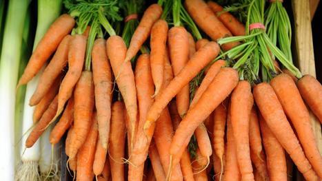 Des chercheurs identifient le gène qui rend la carotte orange, et c'est une bonne nouvelle pour votre santé | SemioFood | Scoop.it