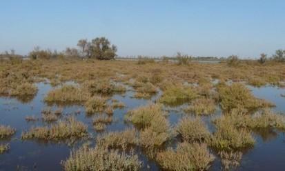 Camargue: l'Agence de l'Eau et la Tour du Valat s'engagent pour les zones humides | Développement durable en France | Scoop.it