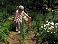 Design elderly accessible gardens | Gardening Life | Scoop.it