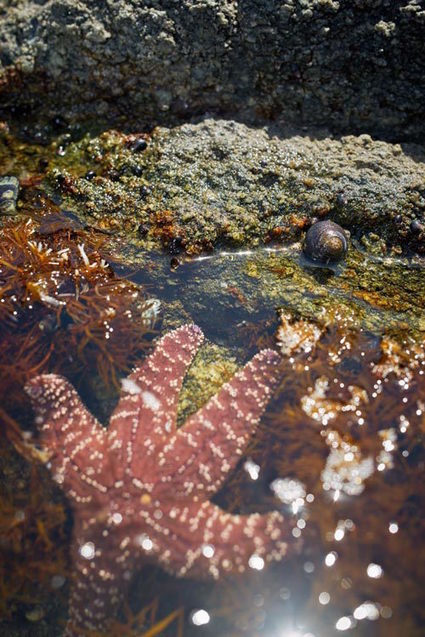 Escargot De Mer In La Mer Et Lhomme Scoopit