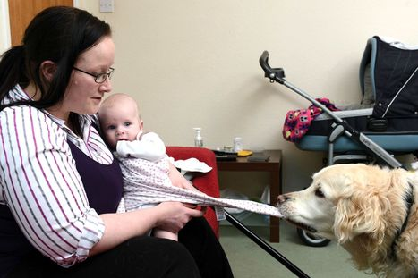 Dog turns pooper scooper: Golden retriever helps disabled mum change nappies | welfare cuts | Scoop.it