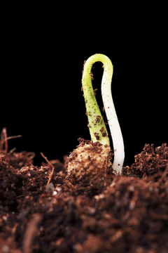 Making your own vegetable seed starting soil