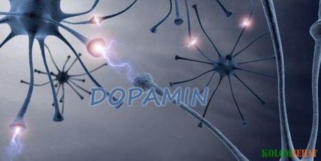 Fungsi dan Peran Dopamin Bagi Tubuh | Kolom Sehat - Tips Kesehatan Harian | Scoop.it