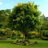 Reputable and capable tree company S&S Tree Service in Garland TX