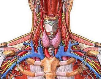 mcqs on thyroid gland