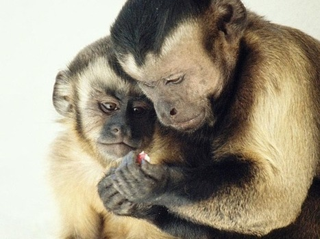 Moral behavior in animals   Self Improvement for all   Scoop.it