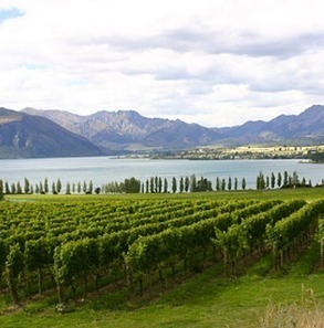 High wine prices key to New Zealand's strategy | Vitabella Wine Daily Gossip | Scoop.it