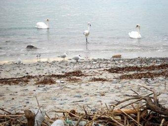 Pollution des plages : l'association Green veut des preuves médiatiques   Toxique, soyons vigilant !   Scoop.it