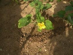 Guide pour débutants en jardinage biologique | pour mon jardin | Scoop.it