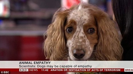 Daniel the Spaniel: The dog that broke the internet   Empathy and Animals   Scoop.it