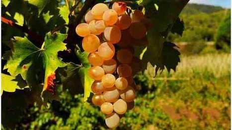 Traité transatlantique : la filière viticole pose ses conditions - Agro Media | Actualité de l'Industrie Agroalimentaire | agro-media.fr | Scoop.it