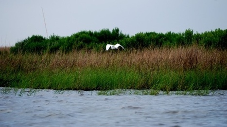 Want to See How Fast Coastal Wetlands and Forests Are Vanishing? | Sustainable Futures | Scoop.it