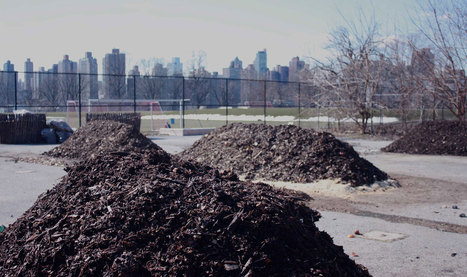 HelloCompost's: Food for waste | Universal curiosity, appreciation and imagination. | Scoop.it