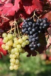 10ème Fête des vins de Loire à Tours : Vitiloire 2012 - Liste Vin | AOC Chinon et Vins de loire | Scoop.it