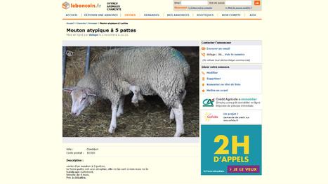 Il vend son mouton à cinq pattes sur Leboncoin.fr | Mais n'importe quoi ! | Scoop.it