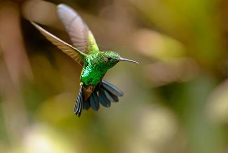 11 Species Surprisingly Close to Extinction | Mes passions natures | Scoop.it