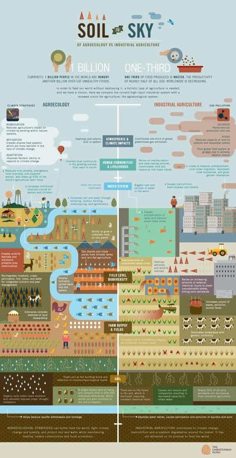 Infographics   People and Development   Scoop.it