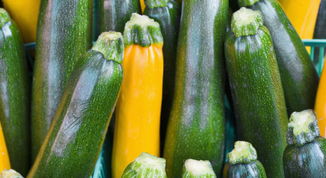 6 Things You Should Know About Zucchini | Health Magazine | CALS in the News | Scoop.it