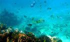 Kenya to build Africa's first underwater museum   ScubaObsessed   Scoop.it