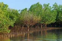 Value Ecosystems - Not Just Crops - When Managing Water Use, says UN Report - UNEP | Nature + Economics | Scoop.it