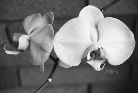 Orchid | black and white film photo | Scoop.it