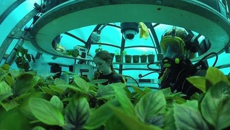 Ils font pousser des légumes au fond des mers : le Jardin de Nemo | Biodiversité & Relations Homme - Nature - Environnement : Un Scoop.it du Muséum de Toulouse | Scoop.it