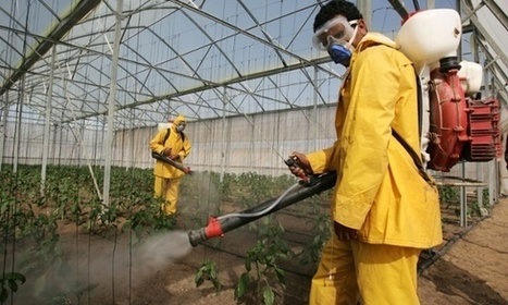 Pesticide residue on food could affect sperm quality, says Harvard study | Ethics of eating | Scoop.it