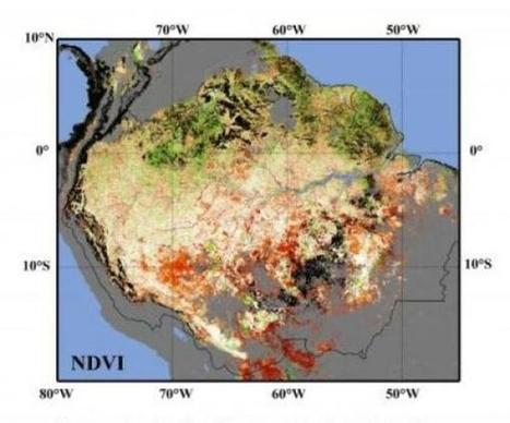 Amazon rainforest said at risk from climate change, longer dry season - UPI.com | scoop.it in education | Scoop.it