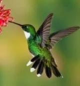 Comment optimiser son site pour Google Hummingbird ? - #Arobasenet   SEO - REFERENCEMENTS   Scoop.it