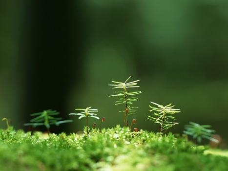 Las plantas emiten gases para comunicarse con el entorno, bacterias y hongos - Ecoportal.net | Agua | Scoop.it