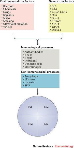 Risk factors and disease mechanisms in myositis
