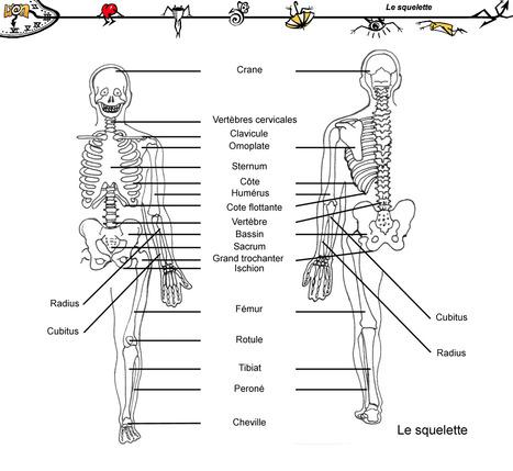 Les mots pour parler du corps humain | French learning - le Français dans tous ses états | Scoop.it