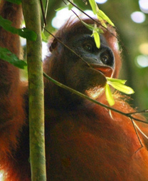 New labelling for palmoil   Conservation & Environment   Scoop.it