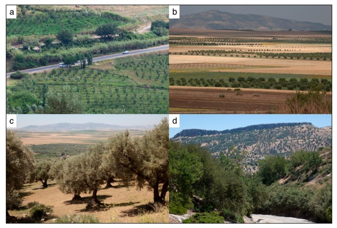 Sustainability   Free Full-Text   Using Local Agroecological Knowledge in Climate Change Adaptation: A Study of Tree-Based Options in Northern Morocco