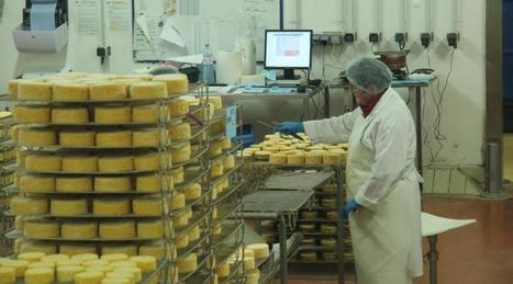 L'usine Graindorge veut redresser le marché du fromage livarot | The Voice of Cheese | Scoop.it