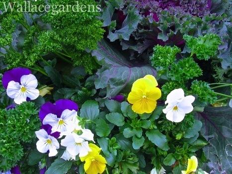 Edible container garden for the winter includes:... | Wallace Gardens | Container Garden Cornucopia | Scoop.it