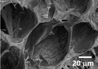 Tissue engineering scaffolds from natural polymers | Dental Implant and Bone Regeneration | Scoop.it