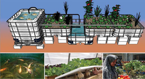 7 rules-of-thumb to follow in aquaponics - United Nations Food & Agriculture Organisation | Aquaponics in Action | Scoop.it