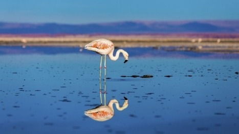 Lithium-Ion batteries-Green cars in spotlight as lithium demand causes flamingo flocks to shrink | All About Cars. | Scoop.it