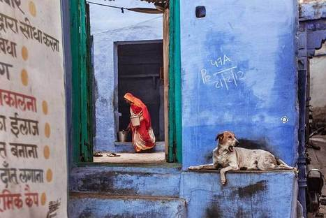 India stray dogs | Photographer:  Serge Bouvet | PHOTOGRAPHERS | Scoop.it