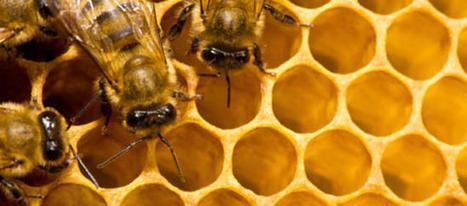 Propolis, pollen, gelée royale, piqûres, venin d'abeille - Se soigner avec les abeilles | Des 4 coins du monde | Scoop.it