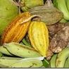 Agro-business Africain alternatif
