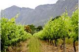 South Africa Wine Exports Setting Records on China Demand | Oltrevino: l'export del vino italiano sui mercati oltremare | Scoop.it