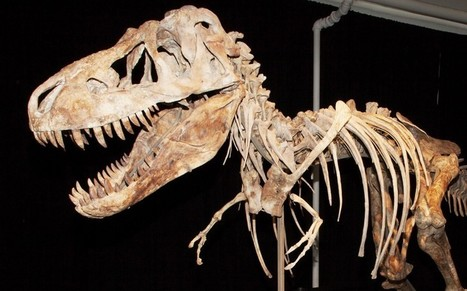 Isle of Wight is dinosaur capital of Britain - Telegraph | Palaeontology News | Scoop.it