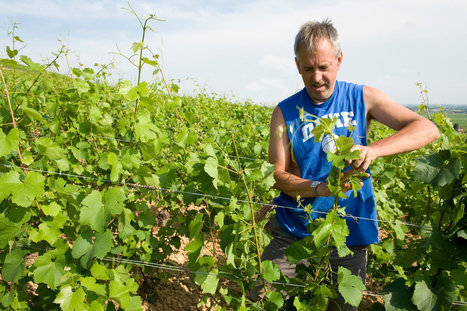 In Burgundy, Winemakers Who Don't Own Land | 'Winebanter' | Scoop.it