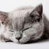 KittenHit