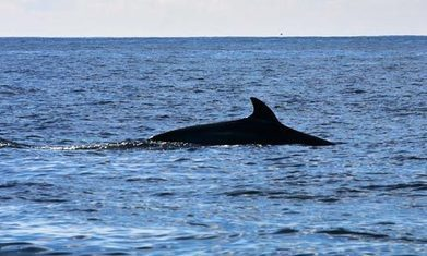 Australia orders Japanese whalers to stay away | Sustain Our Earth | Scoop.it