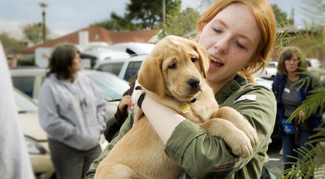 UA Club Says Hello and Goodbye to Puppies | CALS in the News | Scoop.it