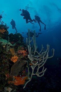Captain's Log - Belize Aggressor III | Belize in Social Media | Scoop.it